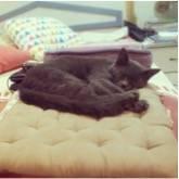 Cat comfy
