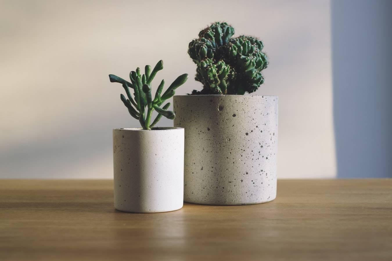 hygge plants